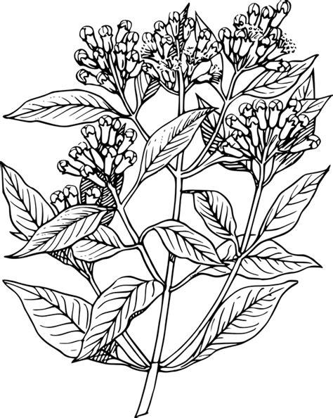 Biji Bunga Lotus Easy Plant 무료 벡터 그래픽 정 향 식물 나무 꽃 꽃봉오리 향긋한 허브 pixabay의 무료 이미지