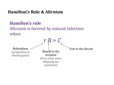 Altruism Equation hamilton s rule
