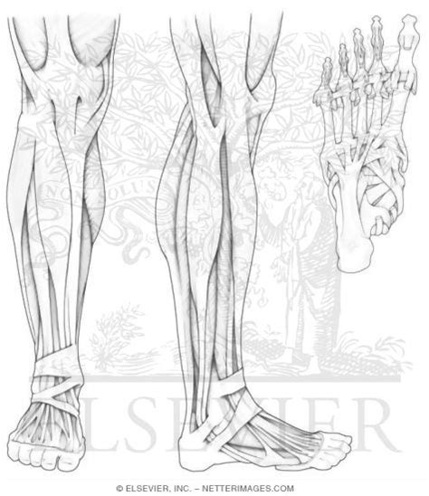 anatomy coloring pages bestofcoloring