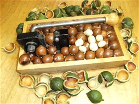 t j s nut cracker pacific coast macadamias