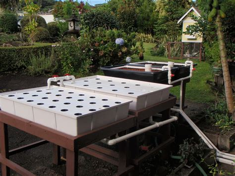 aquaponic grow beds grow beds for aquaponics reasons why plants grow