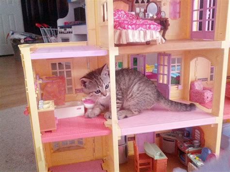 cat doll house cats who are breaking into houses doll houses that is