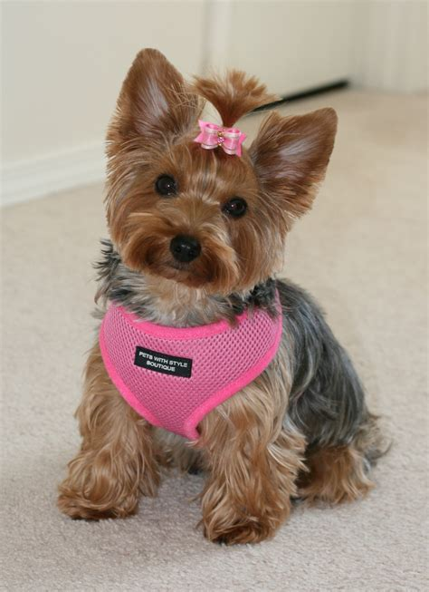 softest dogs bling personalized soft mesh harness