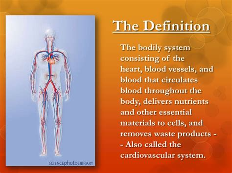 define systemize the circulatory system