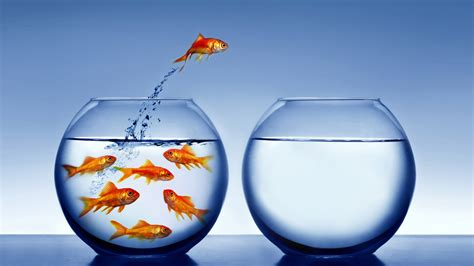 vasca pesce rosso il libero arbitrio esiste per la scienza secondo la