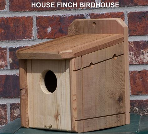 house finch birdhouse pictures
