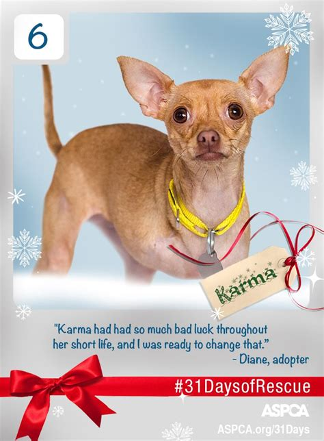 Karma From The Adoptable Pets Photo Pool by 32 Best 31daysofrescue Images On Adoption