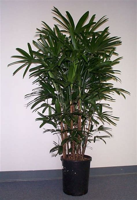 apartment plants houseplant the best indoor plants for