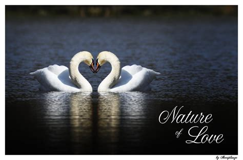 images of love nature nature of love by moosplauze on deviantart