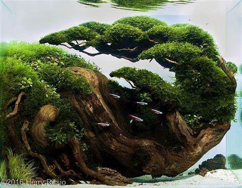 wood aquascape 1000 ideas about aquascape aquarium on pinterest
