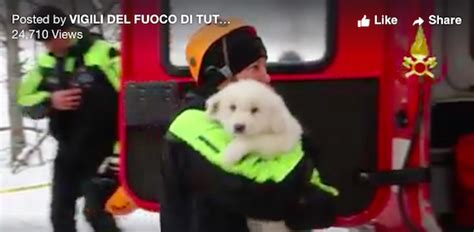 puppies rescued from avalanche puppies rescued from avalanche in italy give rescuers of more survivors critter
