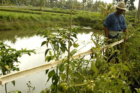 Membangun Kemandirian Desa membangun kemandirian petani lewat simantri balebengong
