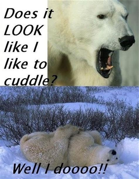 why do dogs like to cuddle cuddle quotes cuddle sayings cuddle picture quotes