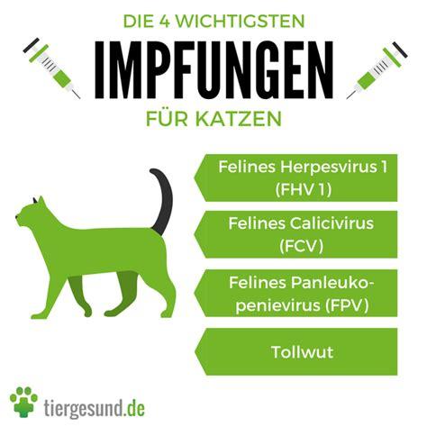 katzen impfen wann katzen impfen wann wie oft tiergesund de