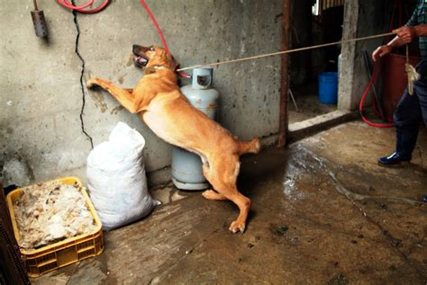 dog slaughter house sign now to stop dog meat