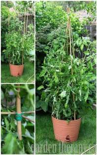Building A Tomato Trellis It S Not Too Late To Make Diy Tomato Cages Garden Therapy