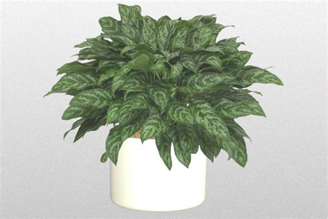 houseplants for low light areas plants for low lighting areas just plant designers inc