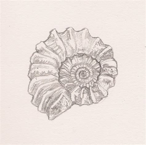 how to draw fossil