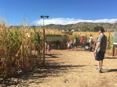 Chatfield Botanic Gardens Corn Maze Colorado For Corn Maze At Chatfield Farms Denverite