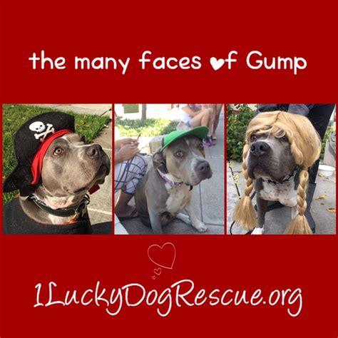 lucky puppy rescue meet gump lucky rescue