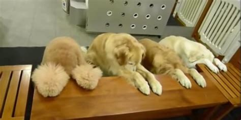puppy praying these devout dogs bow their heads and pray before their meal huffpost