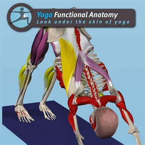 functional anatomy of yoga yoga functional anatomy youtube