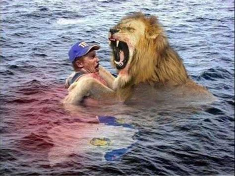 imagenes leones magallanes lvbp navegante del magallanes y leones del caracas