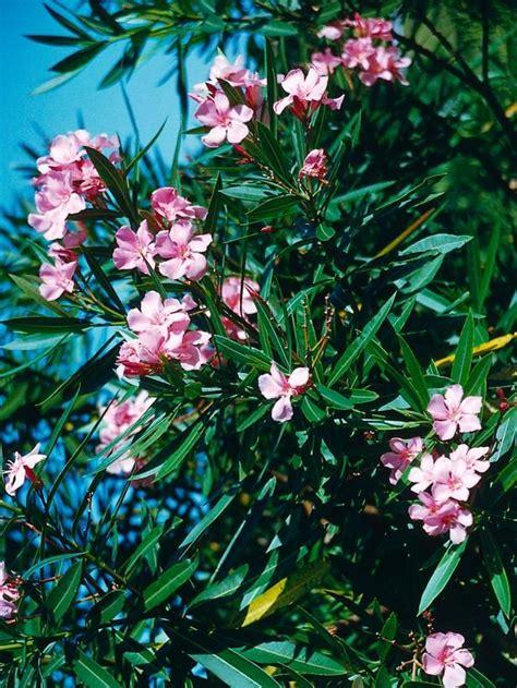 mediterranean style plants