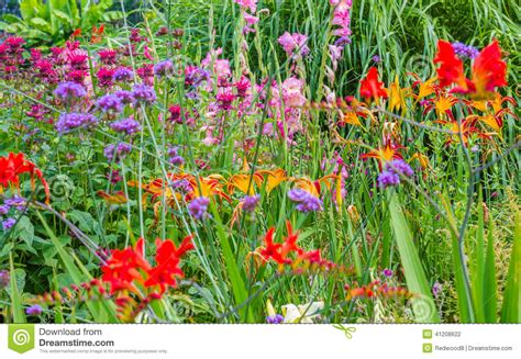 Garden Flowers A Z Country Garden Flowers Stock Photo Image Of Purple Grass 41208622