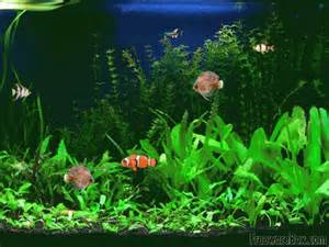 Screensavers with Sound   Screenshot of Free Aquarium Fish Screensaver