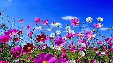 popular spring flowers spring flowers background desktop 183