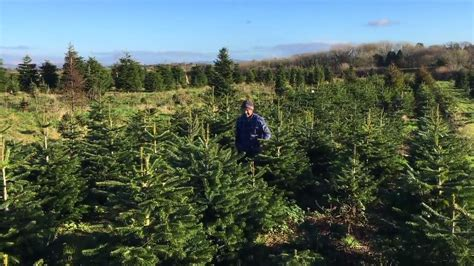 when should i take my christmas tree down wales online