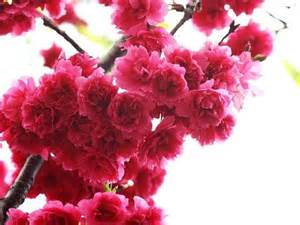 Picture Flowers Beautiful - beautiful flowers desicomments com
