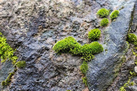 Moos Wachsen Lassen moos wachsen lassen 187 so begr 252 nen sie mauern und beete