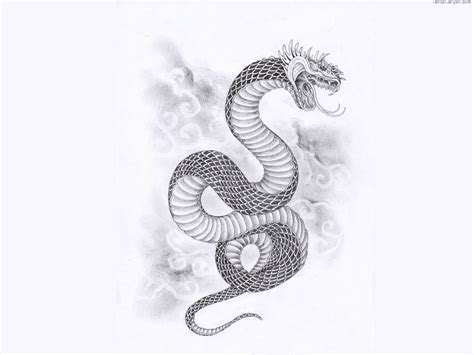 snake tattoo designes best hd wallpapers wallpaper snake pencil and in color