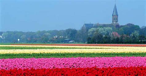 ci di fiori olanda olanda tour tra i tulipani in fiore il sole 24 ore