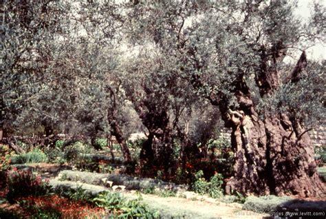 Olive Garden Rock Road Wichita Ks Olive Garden Rock Road Impressive Olive Garden Rock Rd Wichita Ks Olive Garden Fabulous Olive