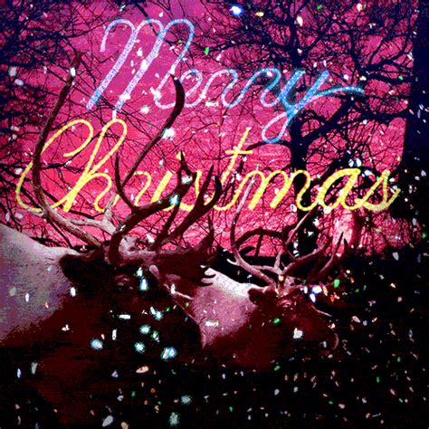 cool merry christmas gif quote pictures   images  facebook tumblr pinterest