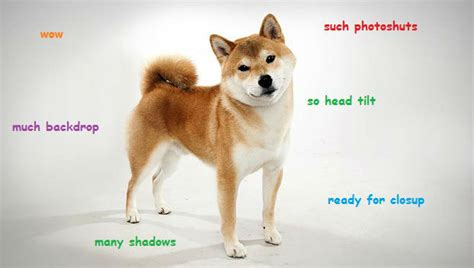 What Is Doge Meme - doge meme wow memes