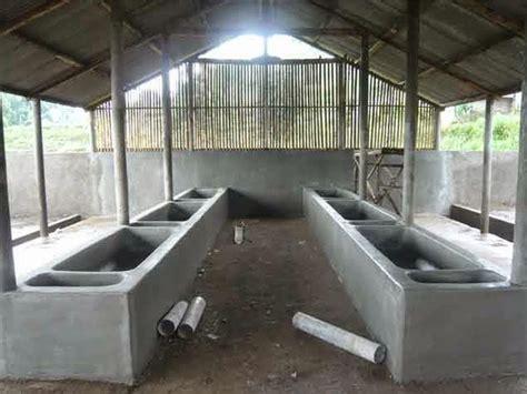 Tempat Pakan Ternak Sapi cara ternak sapi dan mengenal lebih jauh jenis sapi di