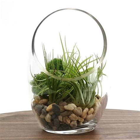 desk plants desk air plant terrarium kit