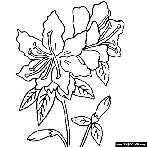 coloring pages of lots of flowers rhododendron flower coloring page lots of flower