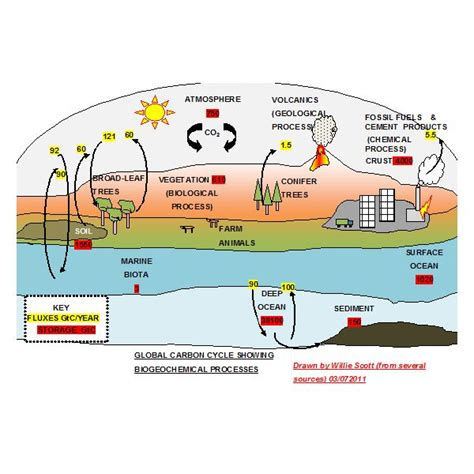 carbon cycle diagram worksheet explaining the carbon cycle with diagrams and a free