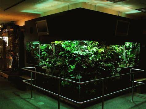 Lu Aquarium Aquascape 56 best terrariums vivariums paludariums images on