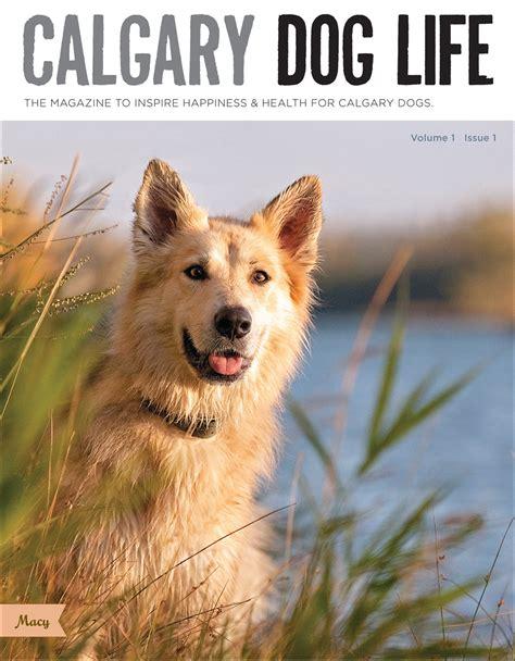 dog house calgary release of calgary s dog magazine calgary s premiere dog magazinesarahann dog