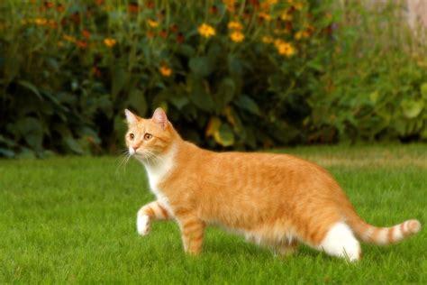 las 10 intoxicaciones comunes en los gatitos rescate