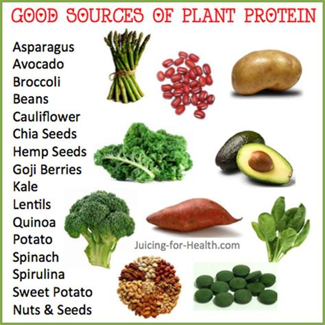 exle of protein cures not medicine plant based protein