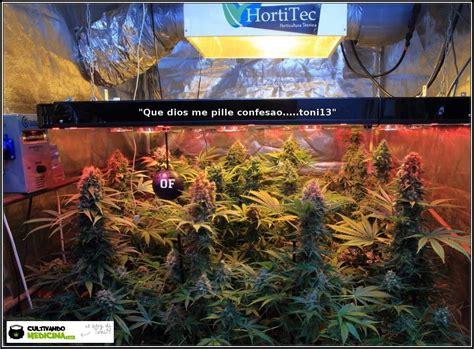 cultivo de marihuana en interior paso a paso c 243 mo cultivar marihuana paso a paso manual b 225 sico