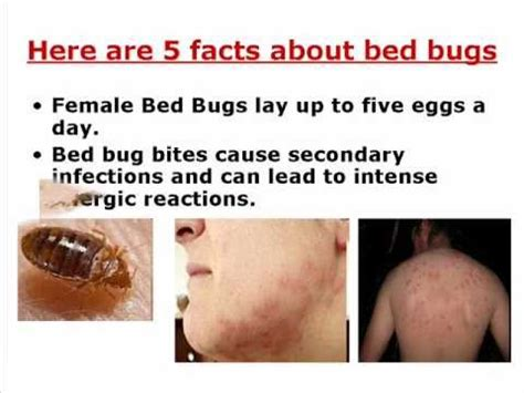 bed bugs   youtube