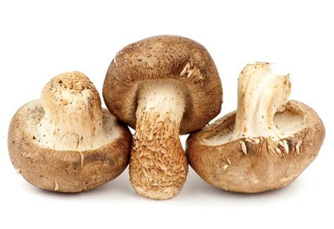 mushrooms for dogs canadian dogs medicinal mushrooms for dogs canadian dogs